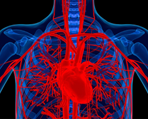 A new study shows that the combination of two immunotherapy drugs reduces rheumatoid disease activity and associated cardiovascular events [NIH]