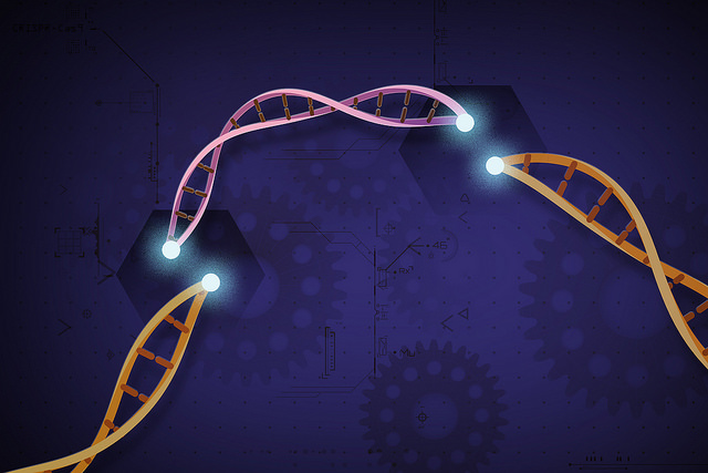 CRISPR-Cas9 without Donor Templates Still Accomplishes DNA Repair