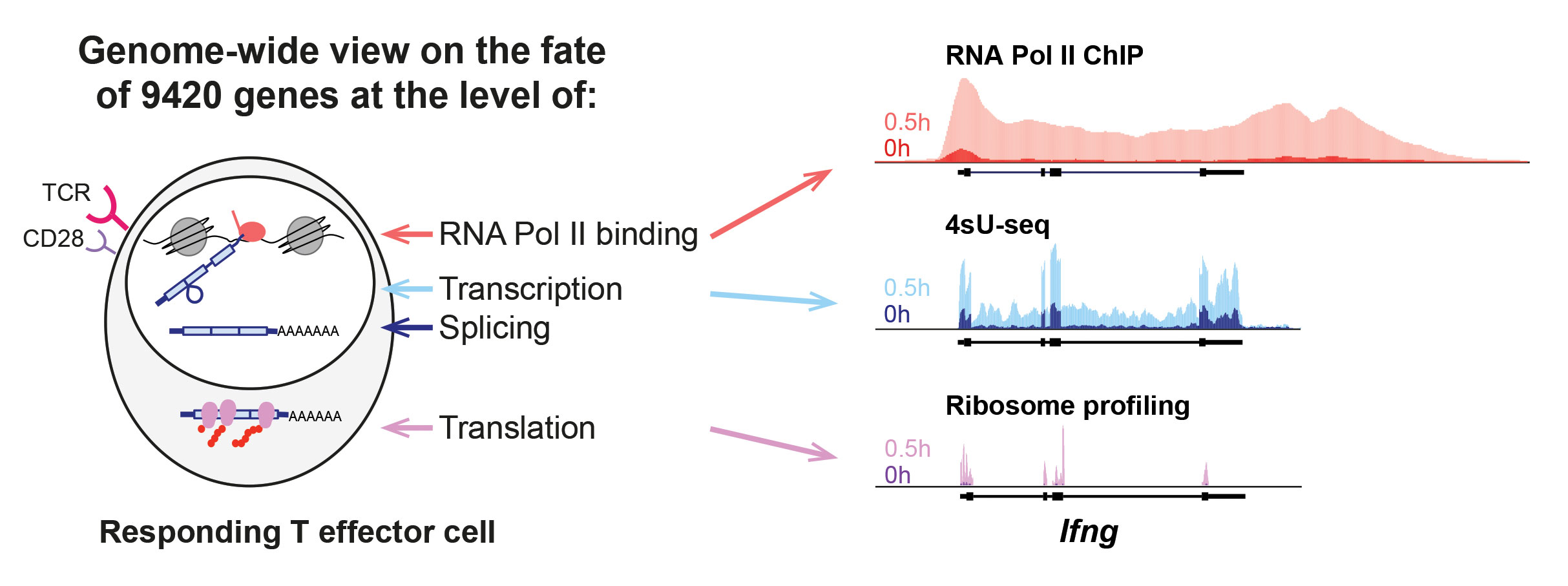 RNA-Seq: Less Lumping, More Splitting