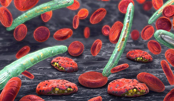3D illustration of blood cells