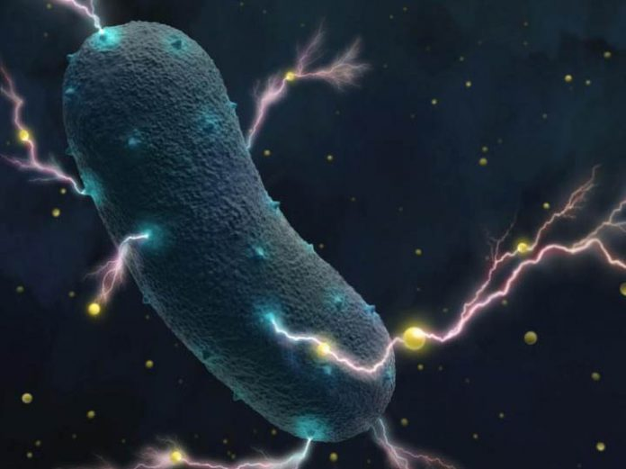 Listeria bacteria transport electrons through their cell wall into the environment as tiny currents