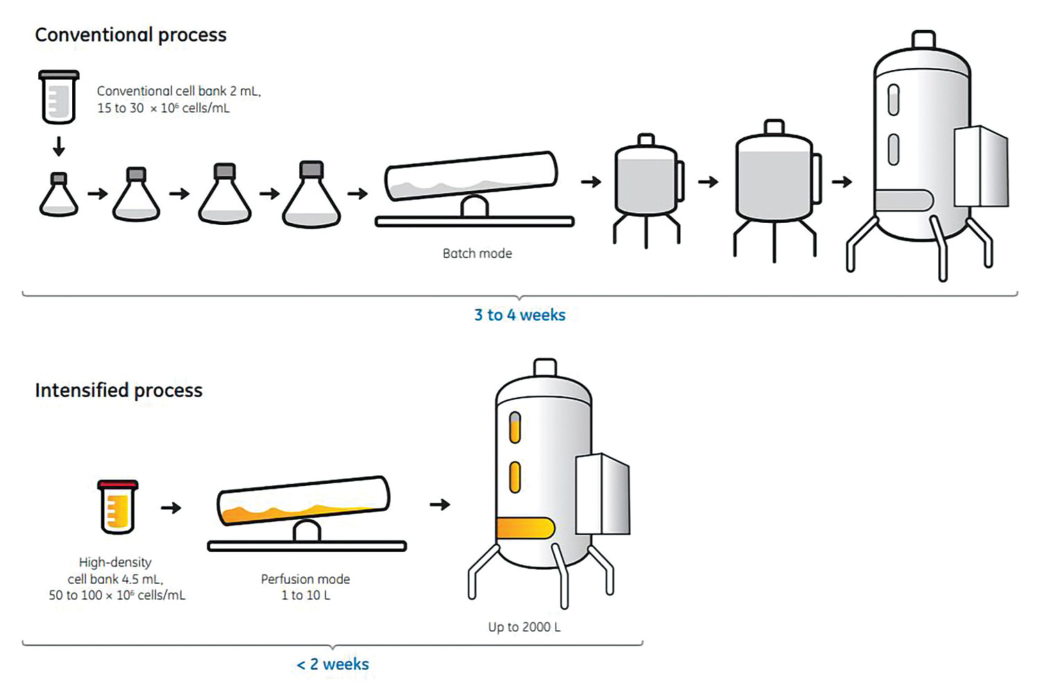 figure 1  vials from a high-density cell bank can be used for direct  inoculation of a small bioreactor culture, eliminating the need for shake  flask