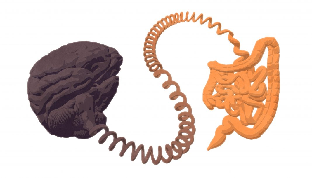 Gut–brain axis. The gut-brain connection.