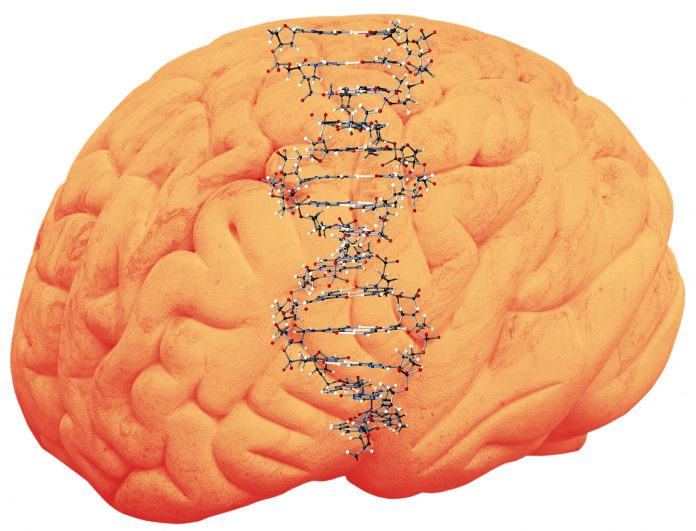 Human brain with DNA