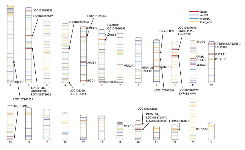 A map of the human genome