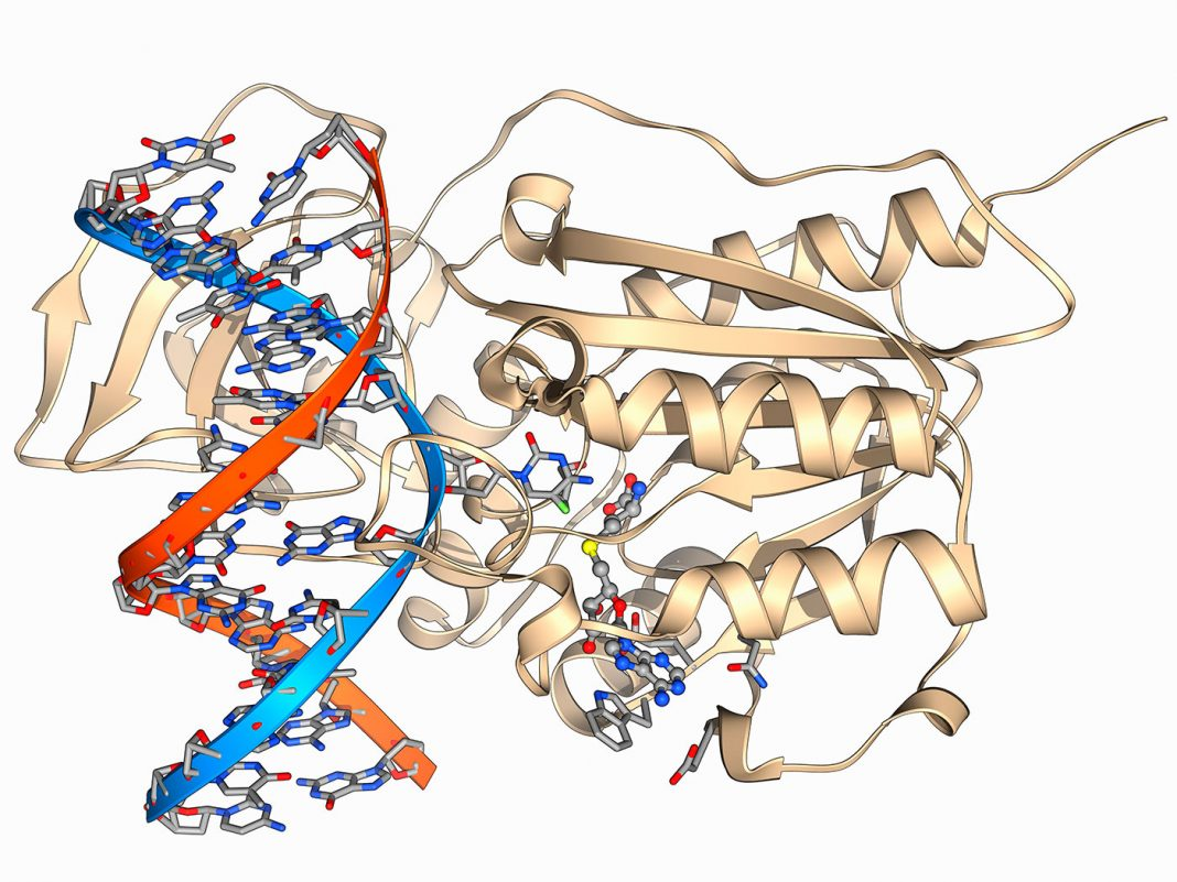 Methyltransferase and DNA