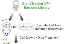 CloneTracker XP™ Expressed Lentiviral Barcode Library