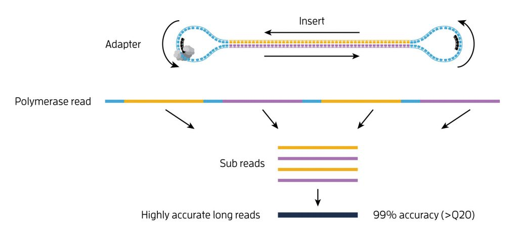 SMRT® sequencing technology
