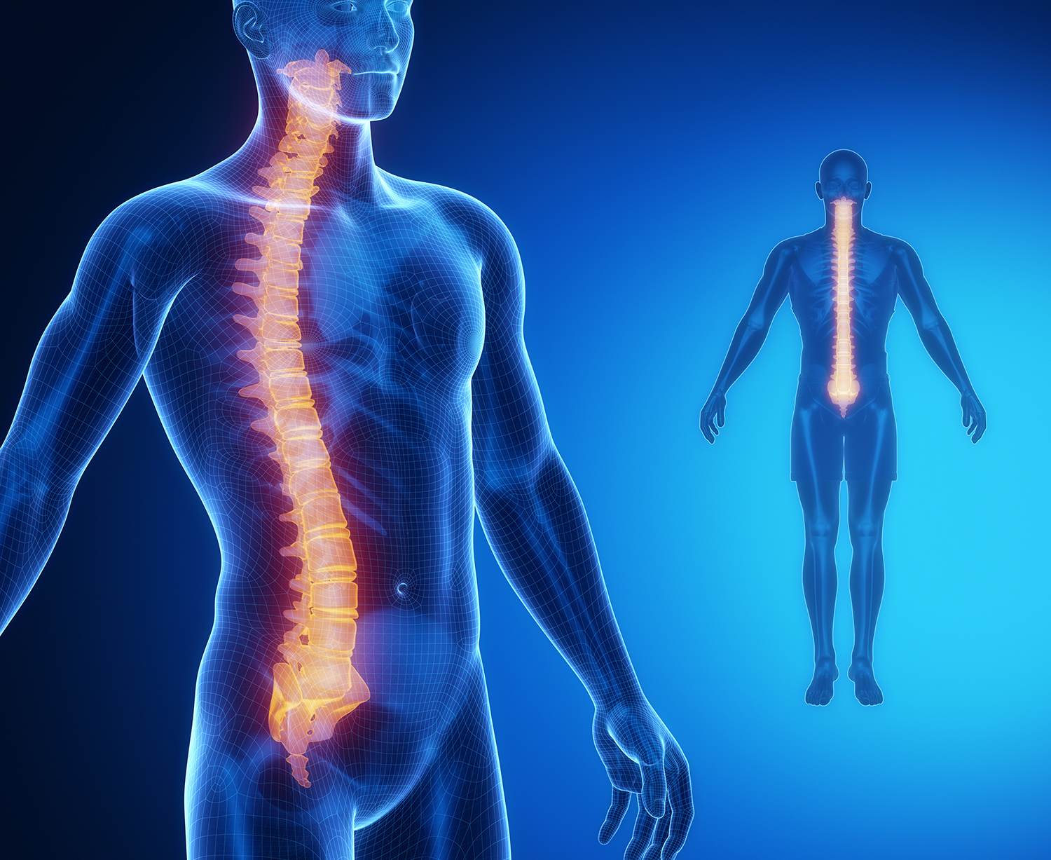 Spinal Cord Regeneration Depends on Activation of Specific