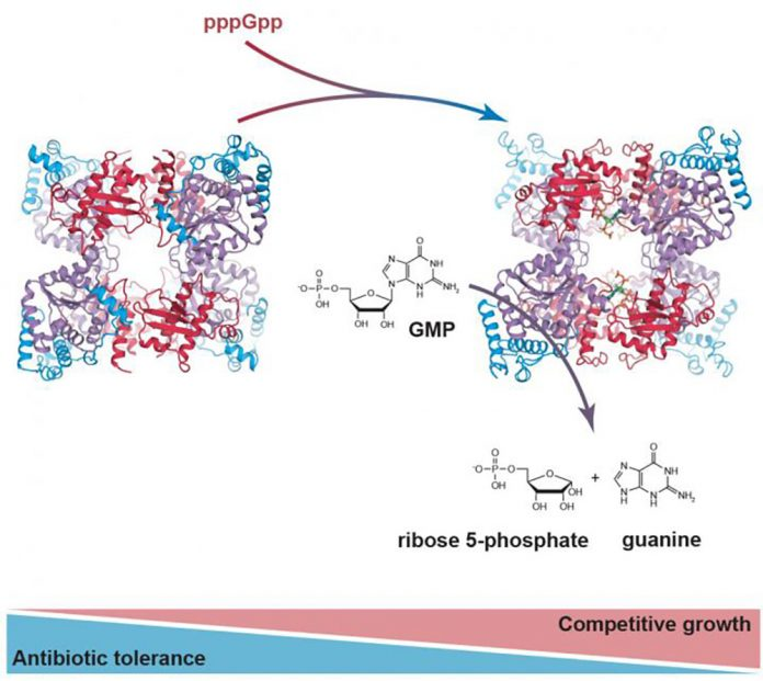 The Enzyme PpnN Binds pppGpp (IMAGE)