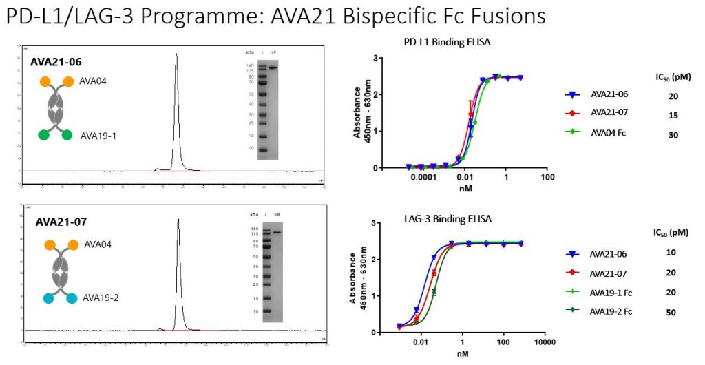 PD-L1/LAG-3 Programme: AVA21 Bispecific Fc Fusions