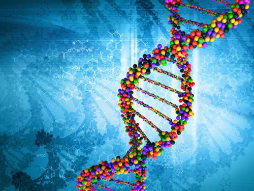 Scientists Sequence 64 Human Genomes as New Reference for Genetic Diversity