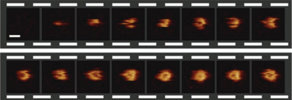 A video sequence of the formation of a hole in a bacterial surface, recorded at 6.5 seconds per frame. The scale bar (see first frame) corresponds to 30 nanometres. Credit: Edward S. Parsons et al.
