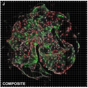DNA Microscopy Spatially Maps DNA and Other Biomolecules in Cells and Tissues