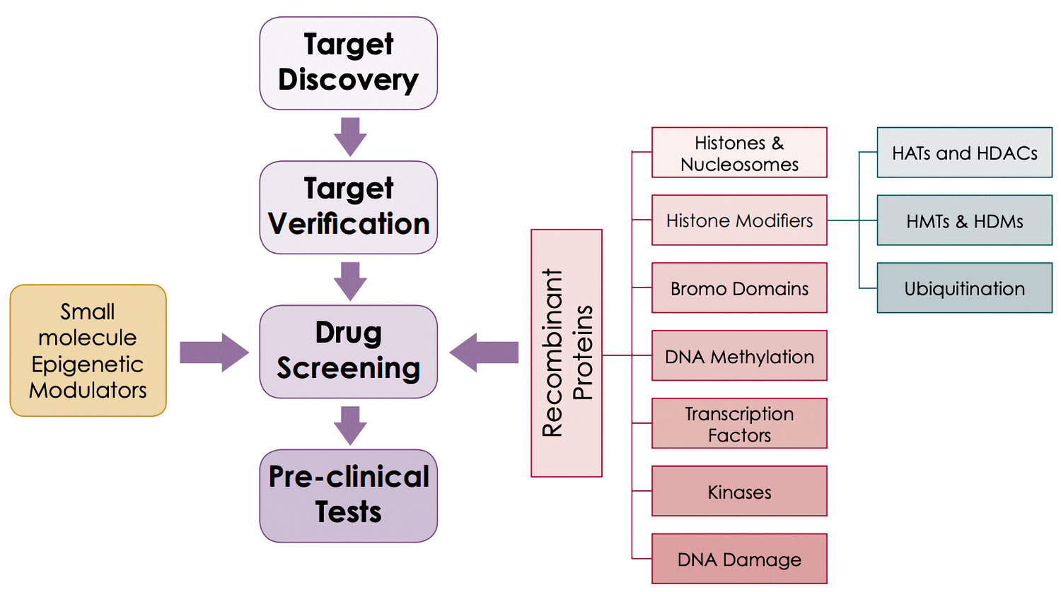 Figure 1. Overview of the drug discovery and development workflow
