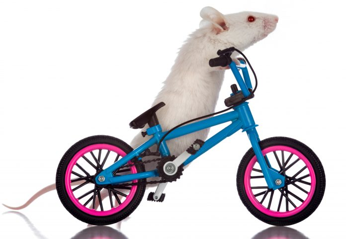 Mouse on an exercise bike