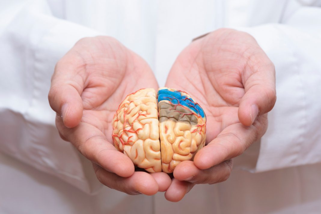 Midsection Of Doctor Holding Artificial Brain