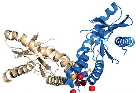 Enzyme Supplement Keeps Mice Youthful and Increases Lifespan