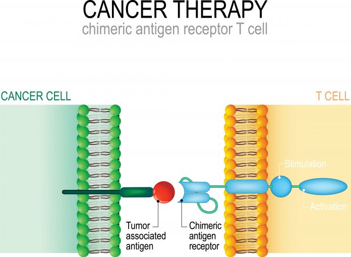 Cancer therapy. CAR T cell immunotherapy