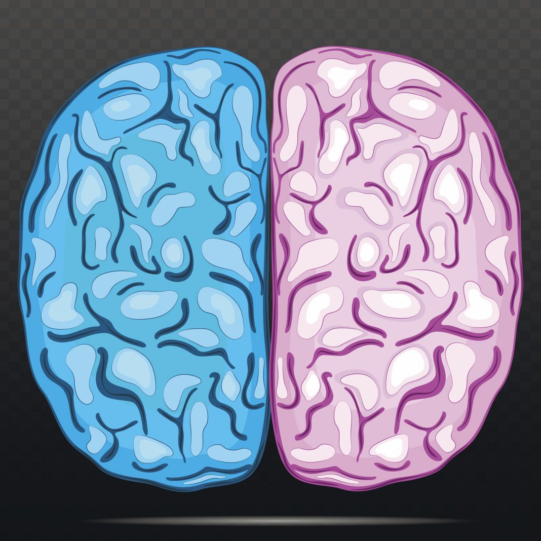 Left and right hemisphere of human brain.