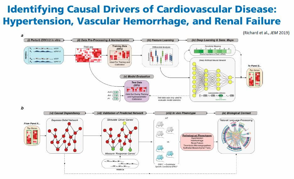 Identifying Casual Drivers of Cardiovascular Disease
