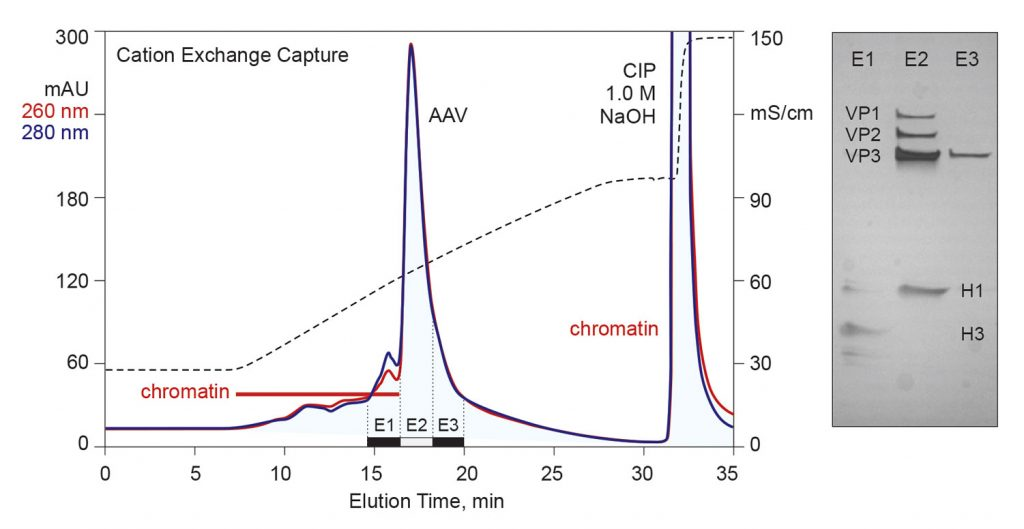 Figure 2. Cation-exchange capture of AAV from chromatin-extracted lysate