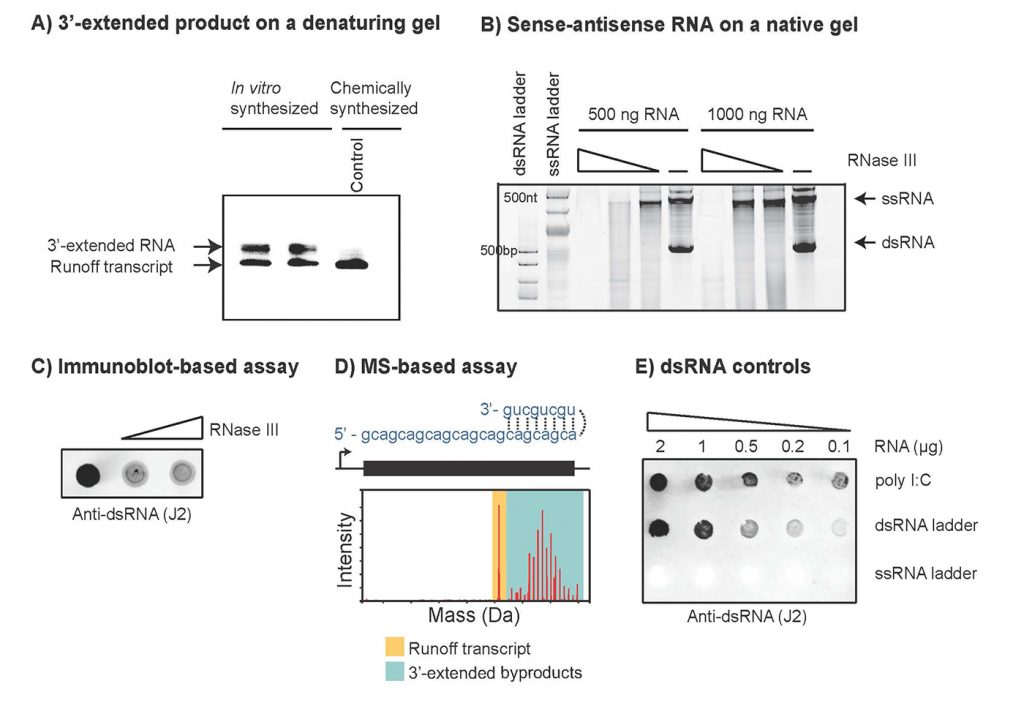 Drug Discovery Tutorial, New England Biolabs Figure 2