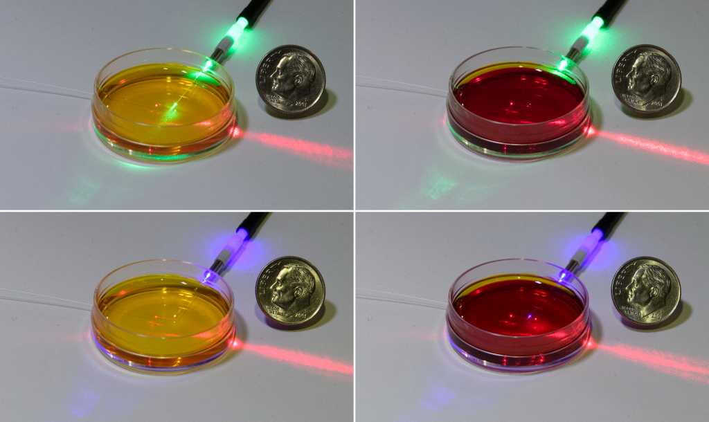 petri dish filled with a solution of phenol red, which changes color depending on acidity