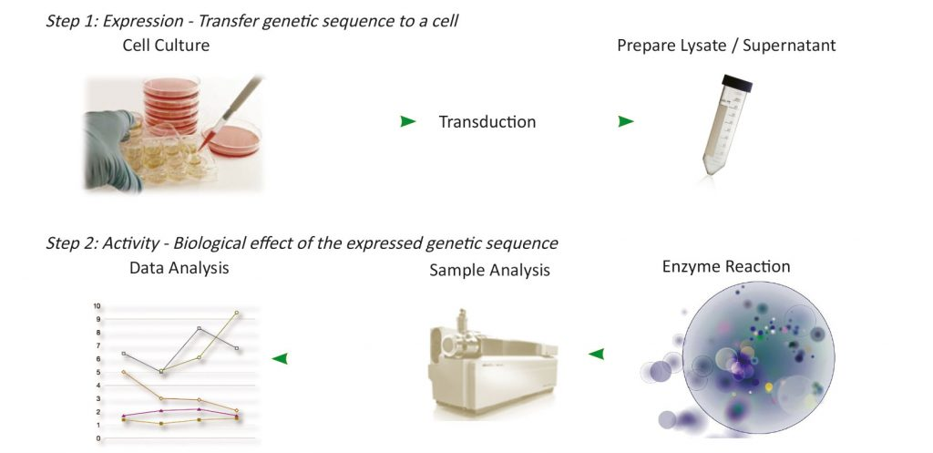 Two-step procedure for developing in vitro potency assays for cell and gene therapy products