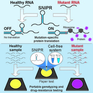 SNIPRs are RNA-based structures