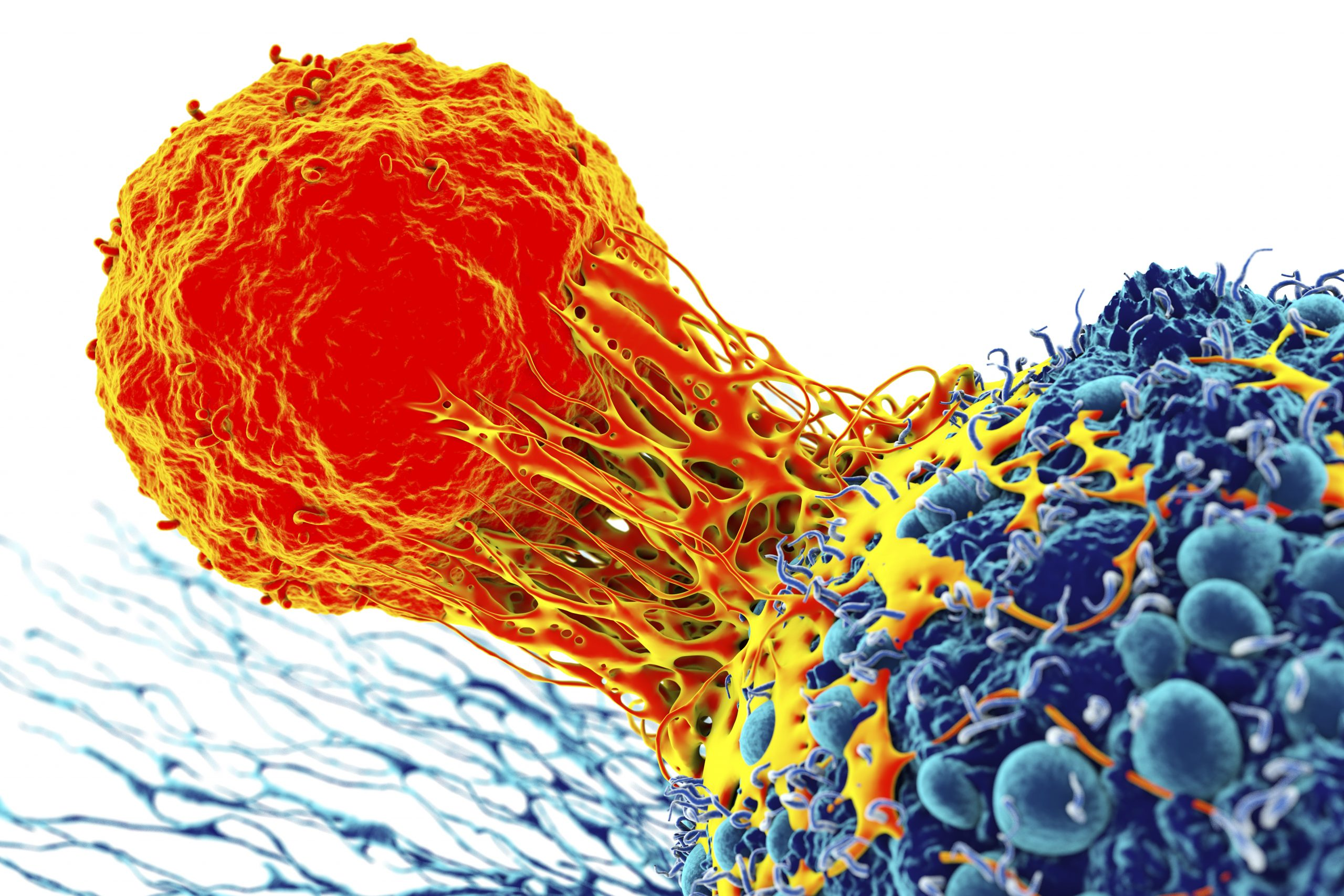 Researchers ID Potential Protein behind DNA Repair in Cancer Cells