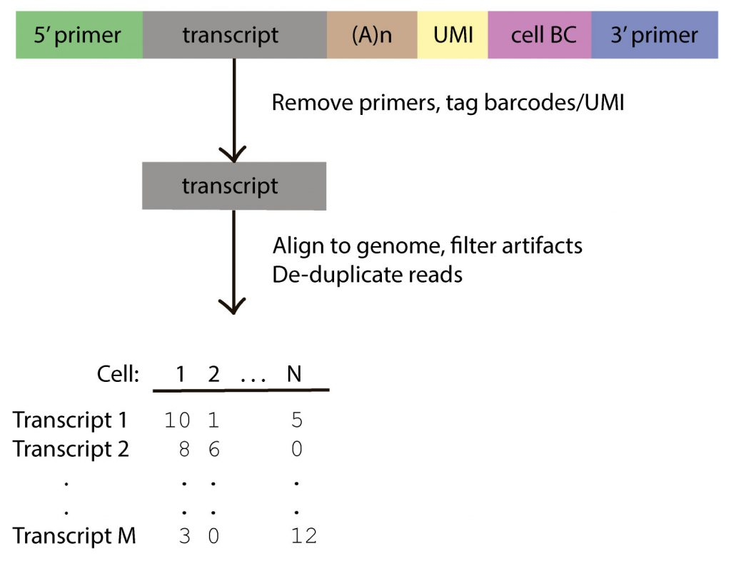 Bioinformatics workflow for single-cell Iso-Seq