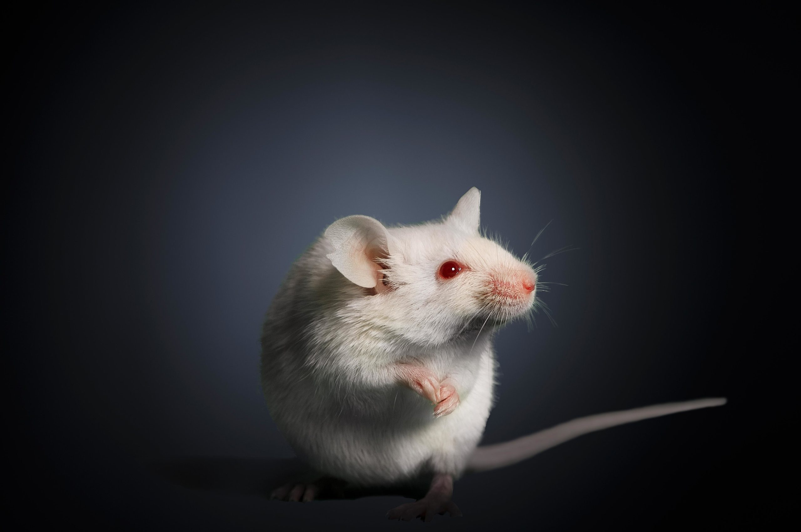Autistic Traits in Mice Associated with Blood Vessel Defects