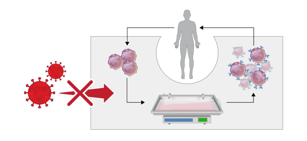 viral safety of autologous cell therapies