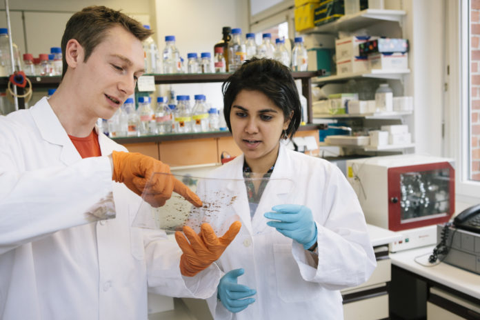 Medical Research: two young researchers analyse a 2-D electrophoresis
