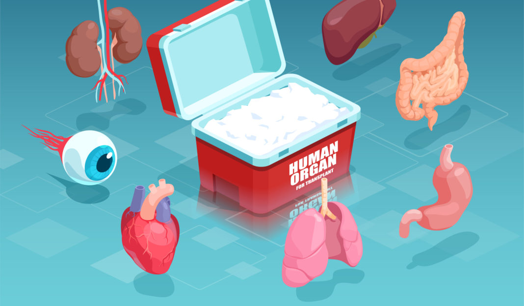 Vector of donor human organs collected for transplantation