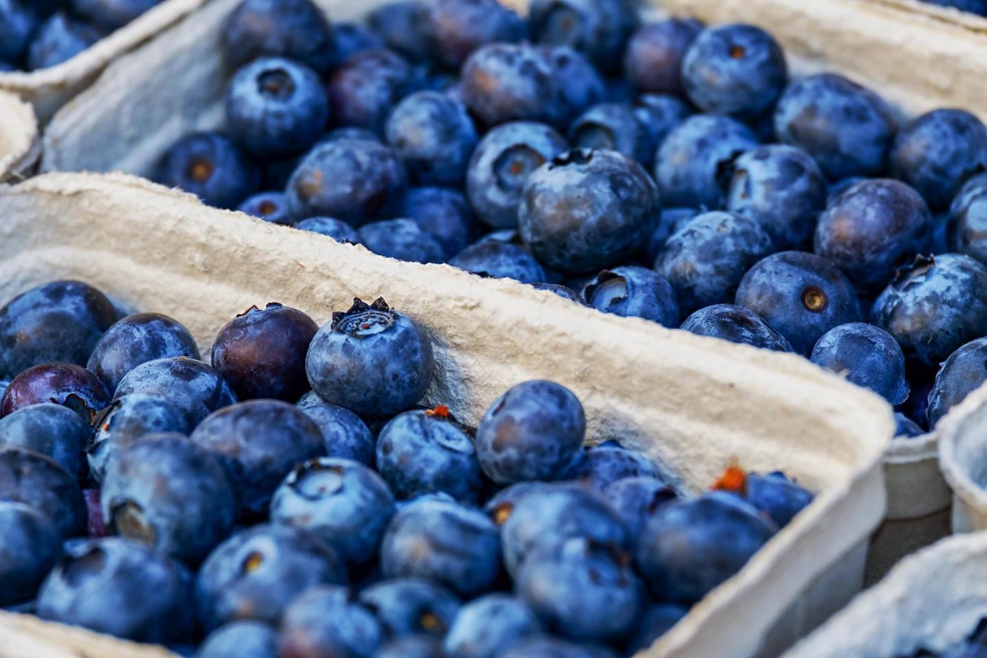 Blueberry Compound May Provide New Inflammatory Bowel Disease Therapy