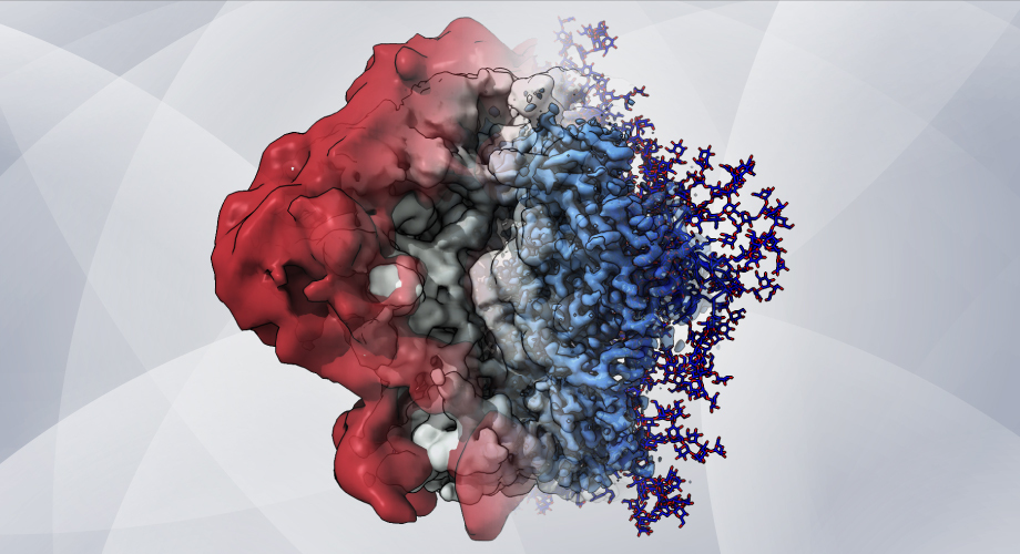 HIV Glycans: Shield Shifters and Spike Stabilizers