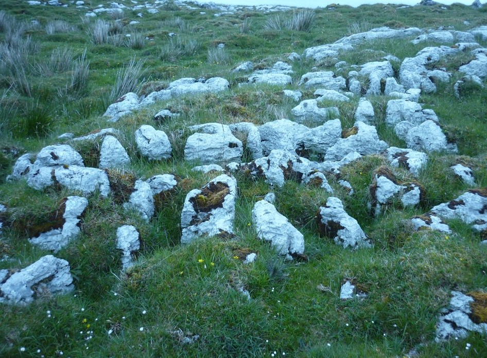 New Antimicrobial Streptomyces Species Discovered in Ancient Irish Soil