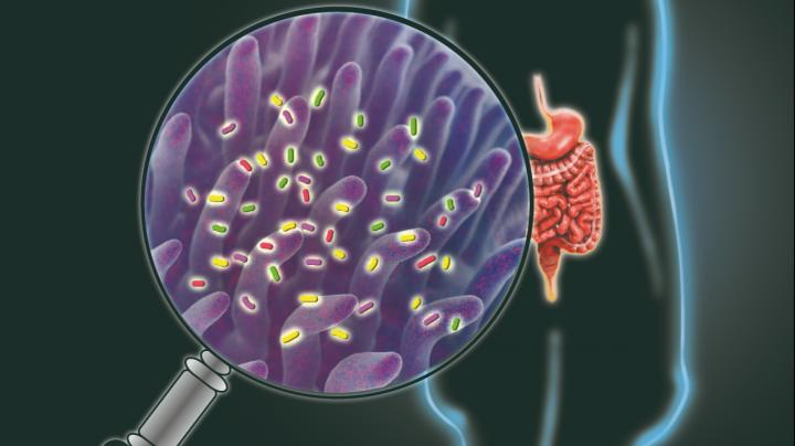 Novel Imaging Tool Gives inside Look into the Gut