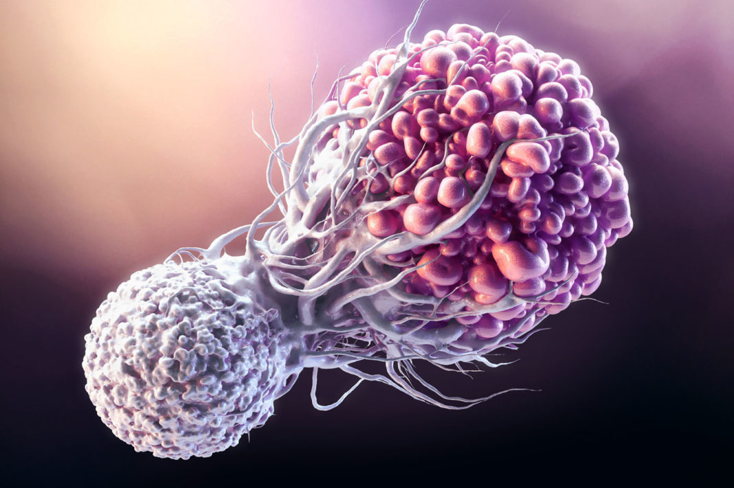 T cell fighting Cancer
