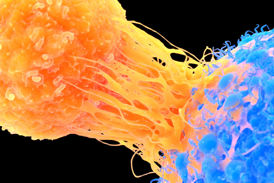 T-cell attaching to cancer cell, illustration