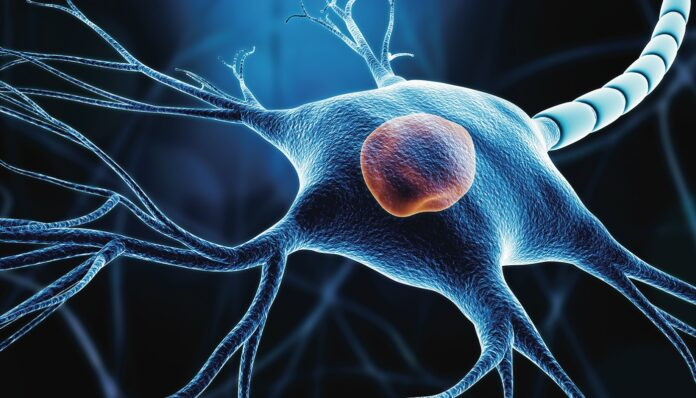 Closeup,Of,A,Neuron,Or,Nerve,Cell,Soma,With,Nucleus,