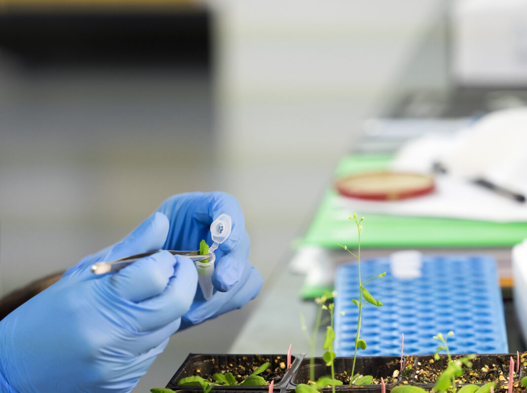 Hands of a scientific investigator in a laboratory of molecular biology realizing works of of plantation of seeds modified geneticallys, DNA. Spain.