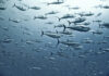 Avant and BTI to Focus on Scalable Production of Cultivated Fish Cells