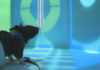 Rats in VR Maze Provide Insights into How Hippocampal Neurons Learn and Remember